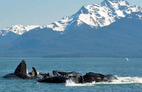 Alaska Whale Watching Tours