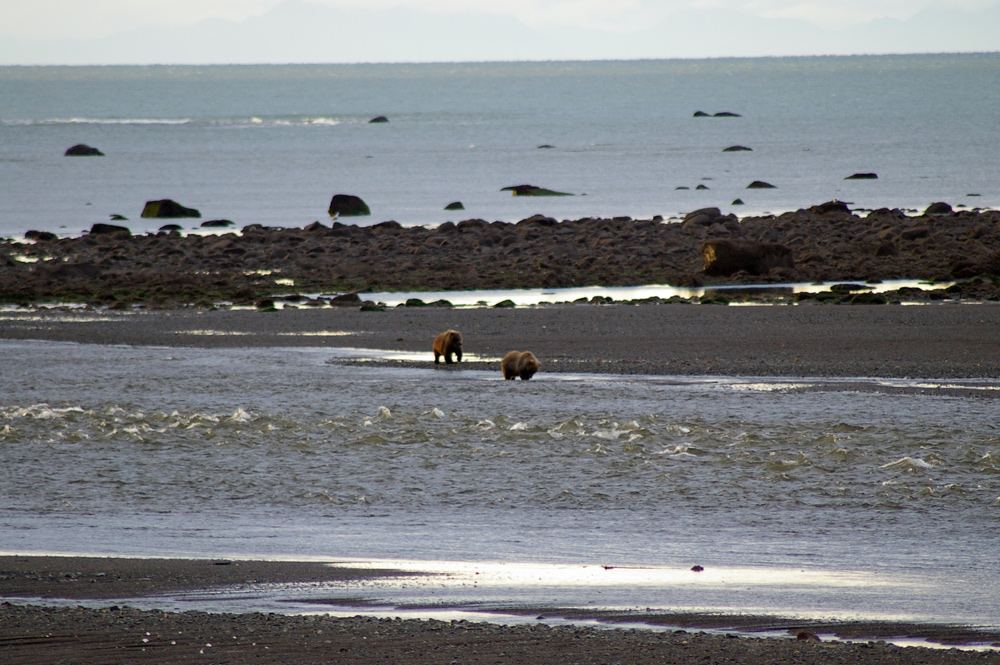 2 Brown Bears Fishing In Alaska River 1000