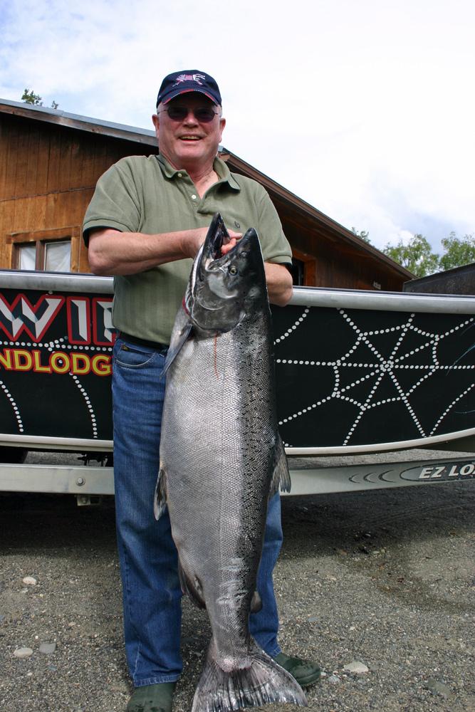 Big Alaska Chinook Salmon Kenai River Alaska 1000