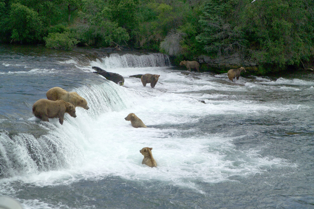 Brooks Falls Bears Katmai National Park 1000