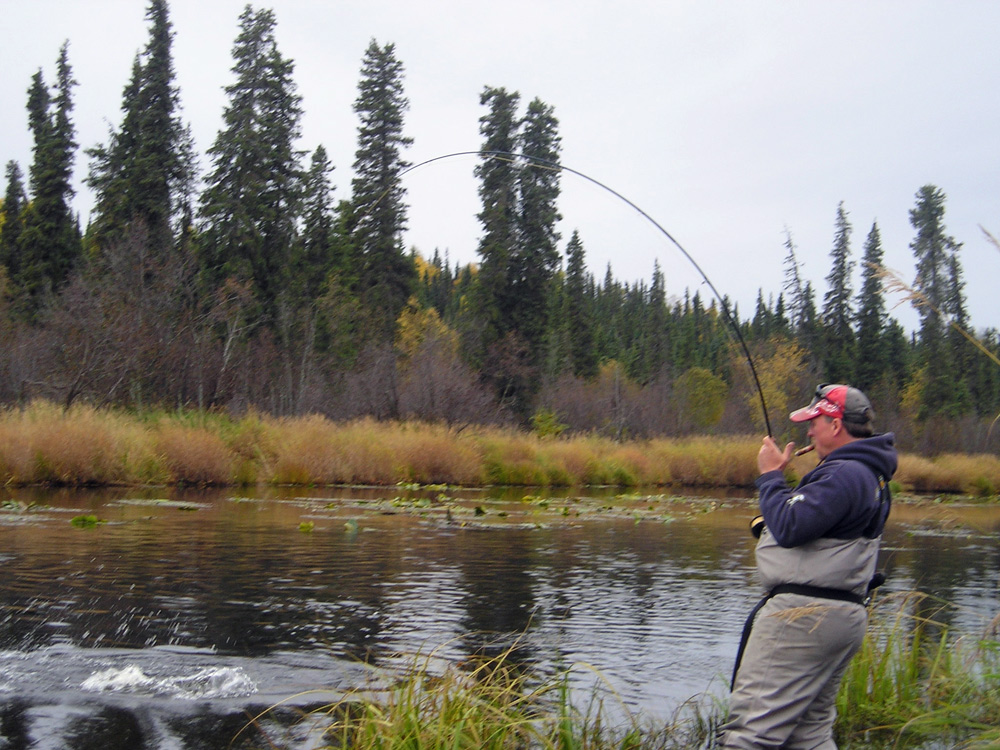 Fighting Salmon In Alaska Fly Outs 1000
