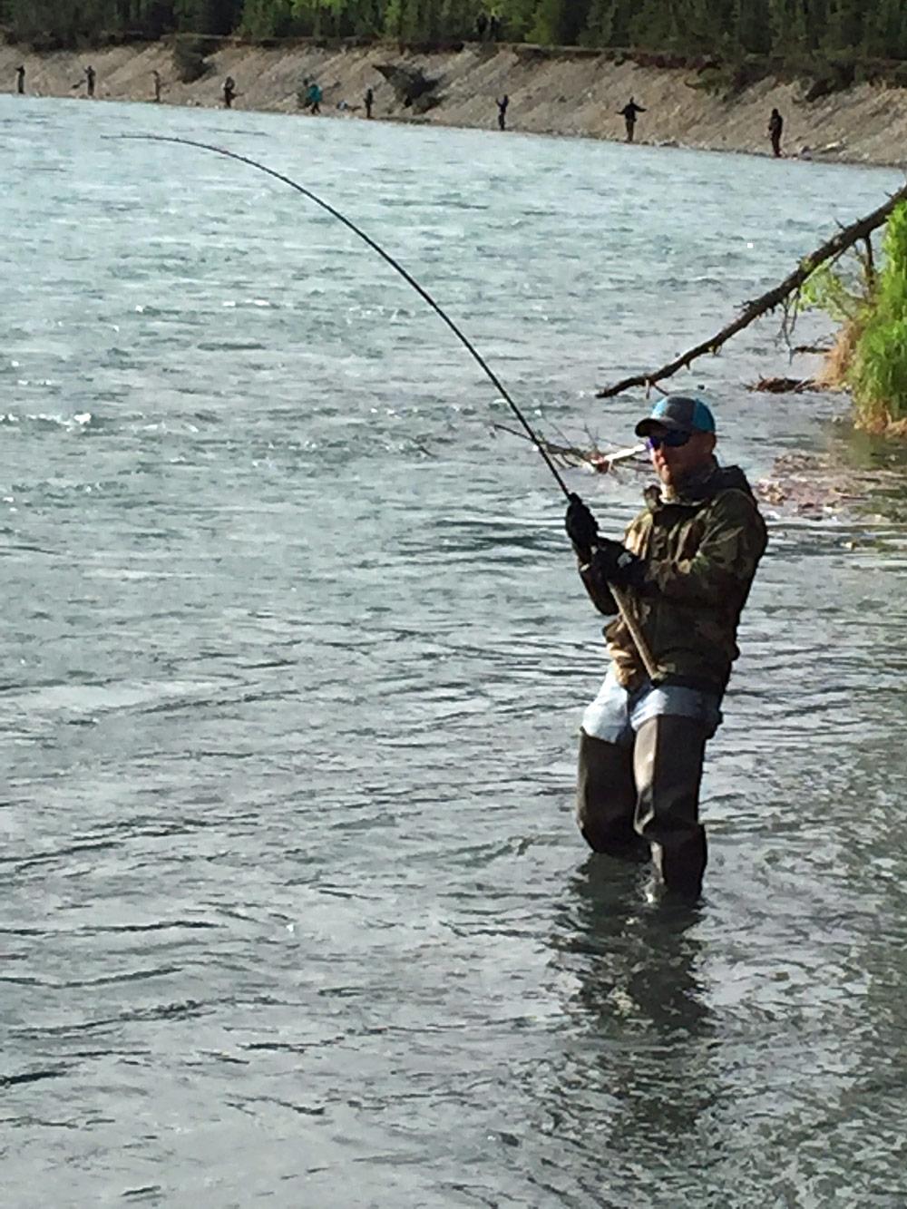 Fighting Wild Sockeye Salmon In Alaska 1000