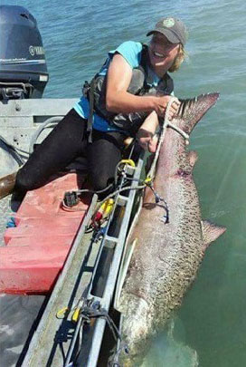 Catch monster Kenai River King Salmon