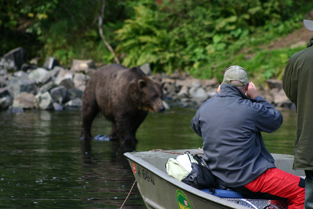 See Alaska Brown Bears By Boat 1000