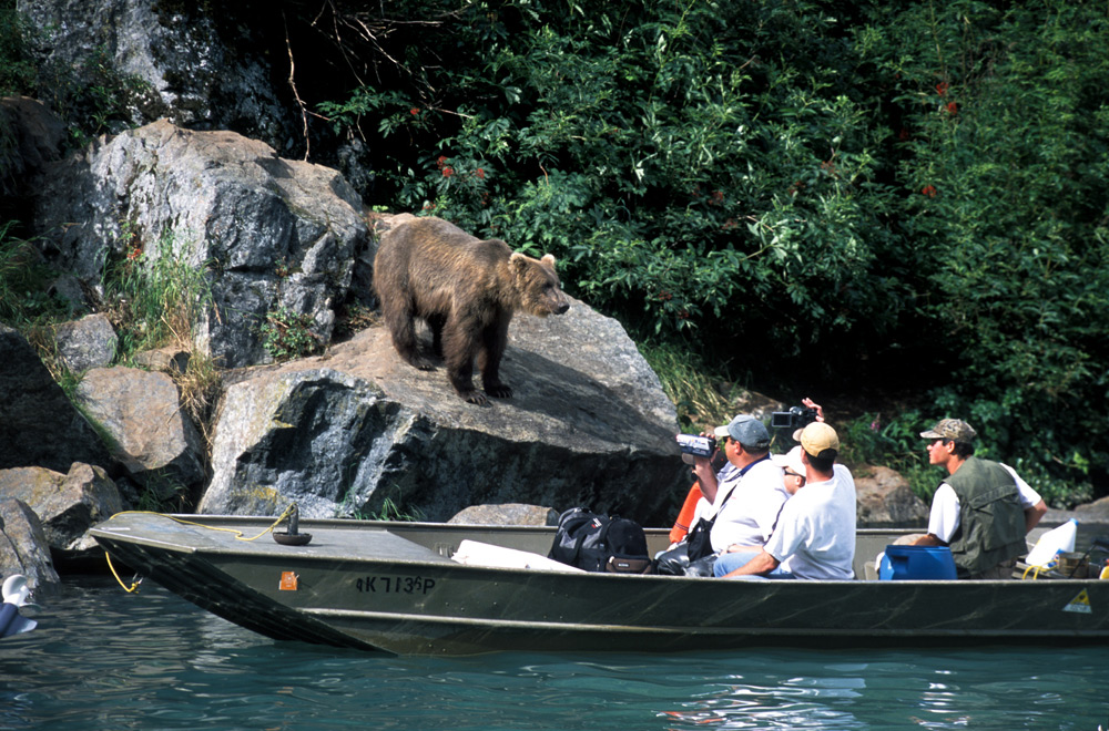 Alaska Bear Viewing Tours