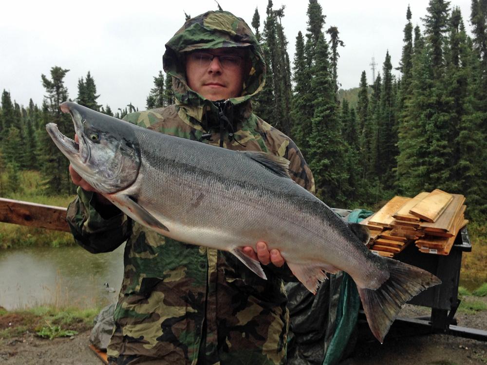 Silver Salmon Rainy Day On Kenai River 1000